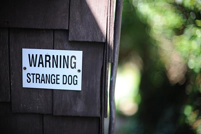 Post_strange_dog_8663