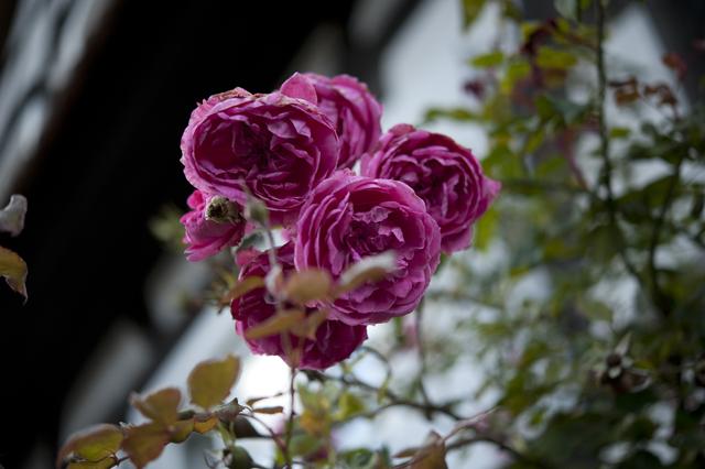 Pink4_DSC0034