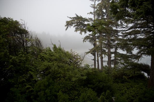 Bäume6R3A6128