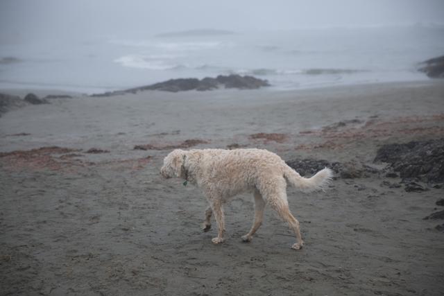 dog6R3A6181