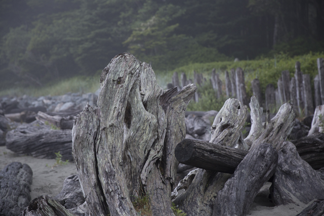 Holz6R3A6216